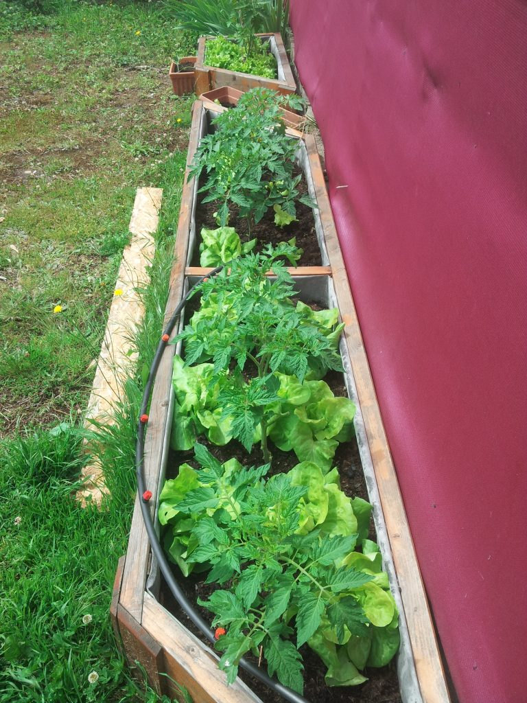 plantation en jardinière pour les légumes du jardins