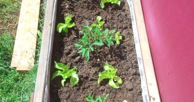 votre potager dans des bacs en bois pour les petit jardin