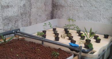 aquaponie jardin sans terre